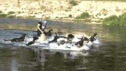 Enlace a Un río lleno de peces es demasiado mainstream