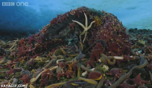 Enlace a Impresionante, animales marinos alimentándose de una ballena muerta