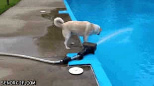Enlace a Cuando un perro subestima la presión del agua