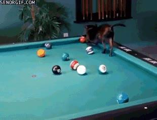 Enlace a Talento y habilidad canina en cualquier juego y deporte
