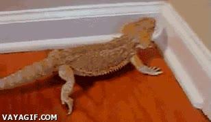 Enlace a Nunca me han gustado demasiado los reptiles, pero después de esto, me compro tres para mi casa