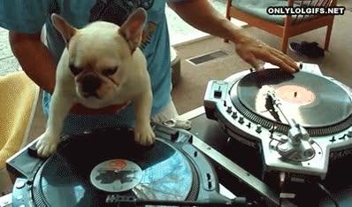 Enlace a Bueno, he estado en fiestas con peores DJ's