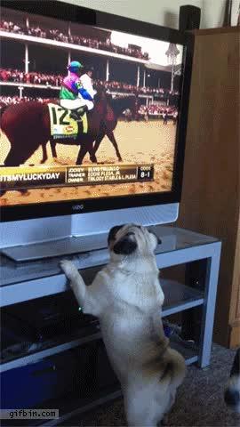 Enlace a ¡Ese caballo debe ser mío!