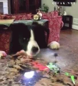 Enlace a Este perro ha aprendido algo hoy, no morder un helicóptero estando en marcha