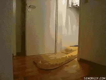 Enlace a ¡Cariño, ves al armario que te he preparado una sorpresa!