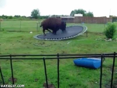 Enlace a Estas camas elásticas de hoy en día no aguantan nada, se sube un bisonte tamaño medio y se rompen