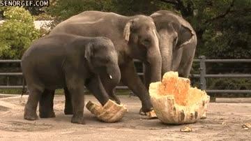 Enlace a Menos mal que con la calabaza de la Cenicienta le acompañaban ratones, si llegan a ser elefantes...