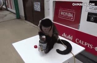 Enlace a Definitivamente el hombre viene del mono