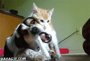Enlace a Felino, escoges un momento inoportuno para jugar