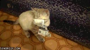 Enlace a No esperes recuperar este dinero, ¿qué te crees, que voy a hacerte de mascota de gratis?
