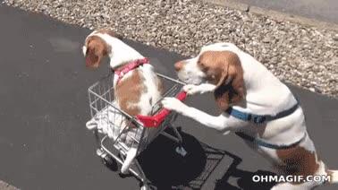 Enlace a Papá, ¿me puedo subir al carro?, nivel: canino