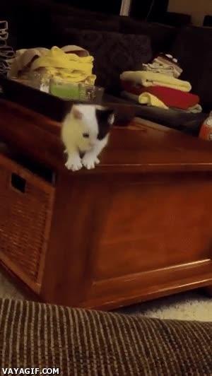 Enlace a El cálculo de distancias no suele ser el fuerte de los gatitos