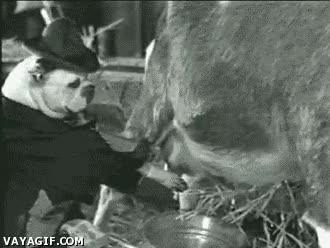 Enlace a ¡Cariño, ya tenemos leche!