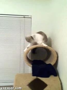 Enlace a ¡Mi gato adora el heavy metal!
