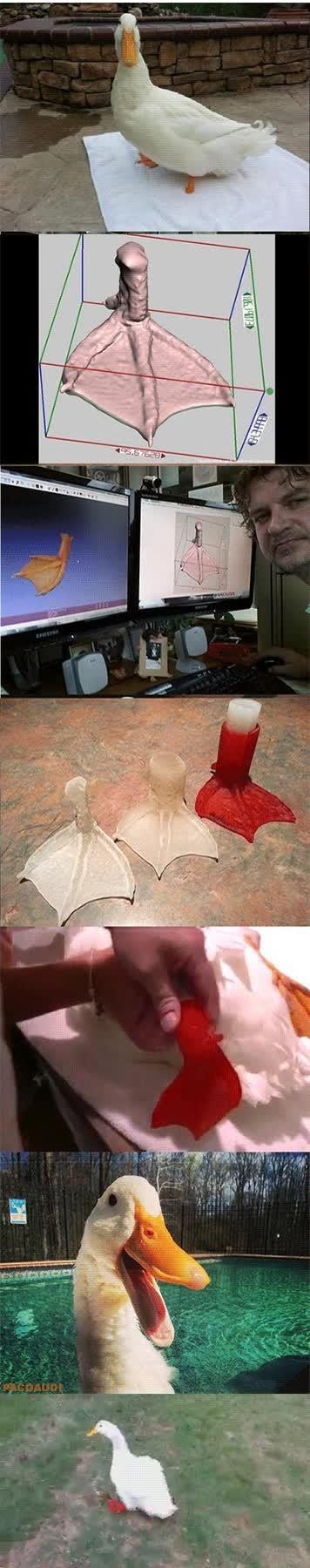 Enlace a La tecnología ha ido bastante lejos, diseño de un pie para un pato hecho con impresora 3D