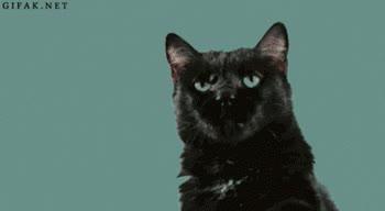 Enlace a Puede que tú percibas una sutil diferencia entre ellos, pero te aseguro que el gato no la ve