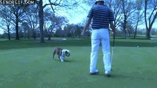 Enlace a Un perro no es el mejor compañero que te puedes llevar al golf