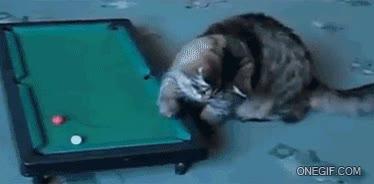 Enlace a Los gatos también saben jugar al billar