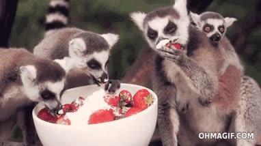 Enlace a ¿Te gustan las fresas con nada? No creo que más que a ellos...