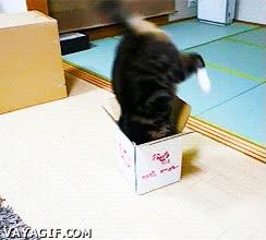 Enlace a Mierda, esta caja no era tan grande como me esperaba