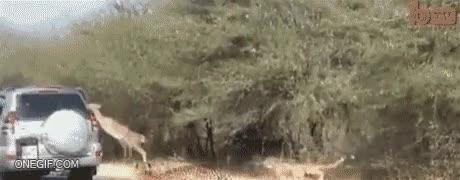 Enlace a Este impala lo tiene claro, cualquier cosa con tal de sobrevivir