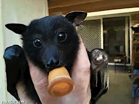 Enlace a Murciélago zorro, ¿quién dijo que no pueden ser monos?