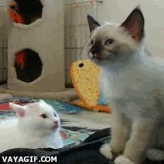 Enlace a Nunca, pero nunca, bajes la guardia contra un gato