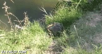 Enlace a Y así empezó la leyenda de las tortugas ninja