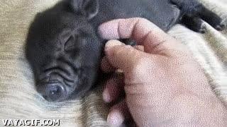 Enlace a La mejor mascota que puedas llegar a tener, al menos en adorabilidad