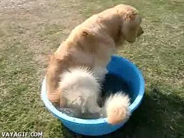 Enlace a En días de calor, nada mejor que un bañito, aunque sea así de mínimo