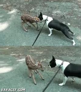 Enlace a Al final no quiere ser amigo de Bambi