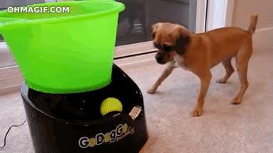 Enlace a No sé si el inventor de esto no le gusta mucho jugar con su perro o el perro es un forever alone
