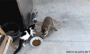 Enlace a Mira, fíjate bien, yo también soy un gato, así que puedo llevarme lo que quiera