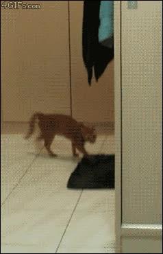 Enlace a Nada se asusta con más intensidad que un gato, ¡vaya salto!