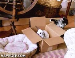 Enlace a ¡Ya te puedes estar saliendo de mi caja!