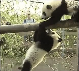 Enlace a ¡Larga vida al rey!, nivel: panda