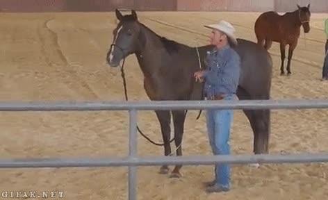 Enlace a ¡Estúpido caballo, el sueño de mi vida es ser jinete, deja que te monte!