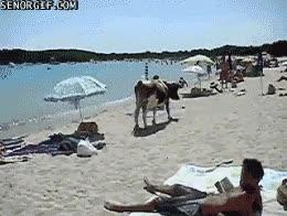 Enlace a ¡Mira! ¡Mi suegra está en la playa!