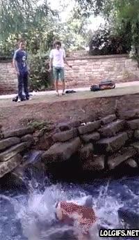 Enlace a Mirad la majestuosidad de mi salto sobre este río