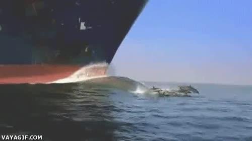 Enlace a Delfines viviendo al límite