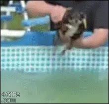 Enlace a A mi perro hay que darle cuerda antes de nadar
