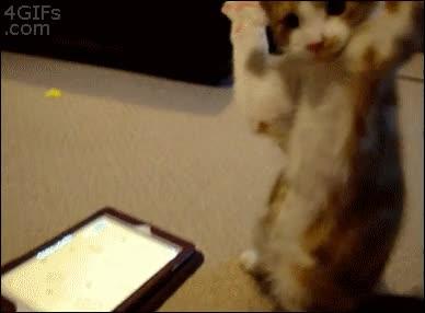 Enlace a ¡Te tengo ratoncito, no escaparás!
