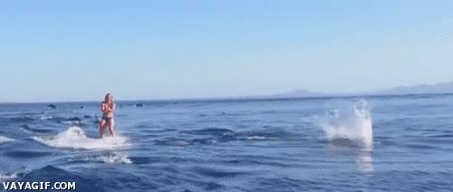 Enlace a Esquí acuático entre delfines, ¡supera esto!