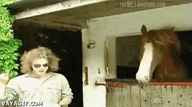 Enlace a El Rock llegó hasta a los caballos... ¡LARGA VIDA AL ROCK!
