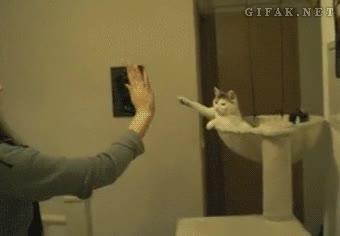 Enlace a Para que luego digan que los gatos pasan de sus amos, ¡high five, Misifú!
