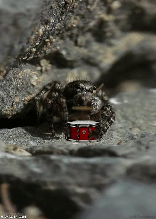 Enlace a Por favor, un redoble de tambores, señora araña