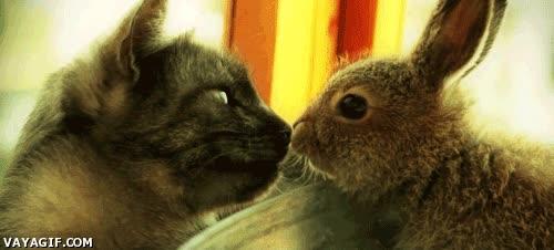 Enlace a Deberíanos besarnos para romper la tensión