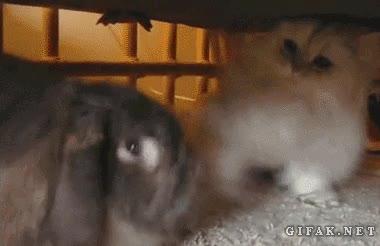 Enlace a ¡Va gatito, juega conmigo! ¡Que no, que no, que no! ¿Cómo te lo digo?