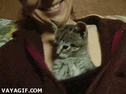 Enlace a La ventaja de ser un gato es que te dejan dormir en los mejores sitios