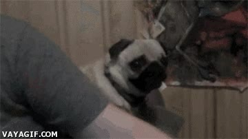 Enlace a Pediofobia canina, porque todos tenemos fobias extrañas